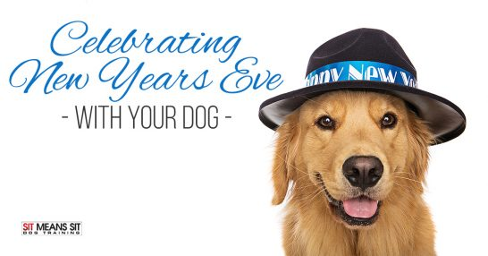 Celebrating New Years Eve with your dog.