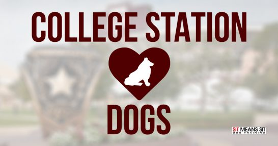 College Station Loves Dogs
