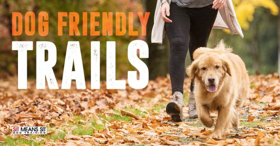 Check out this Dog Friendly Hiking Trail in College Station, Texas.