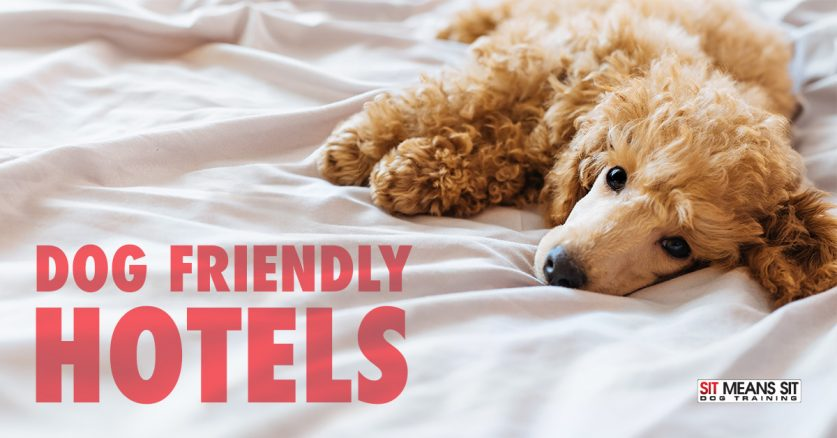 Dog friendly hotels in College Station Texas.
