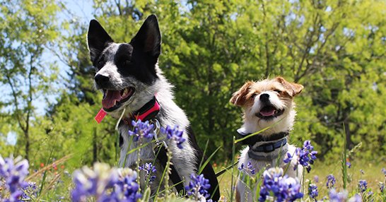 Two Dogs In Flowers