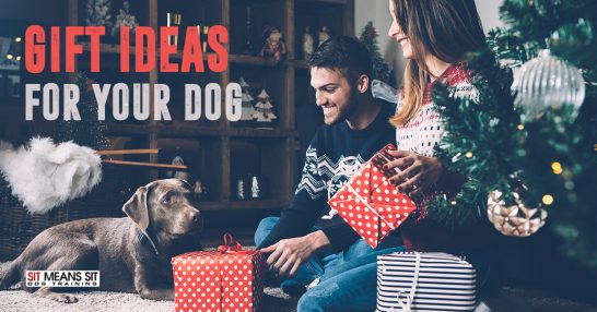 Gift Ideas for Your Dog.