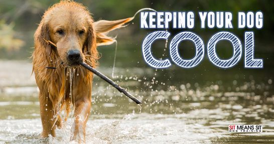 Keeping your dog cool.