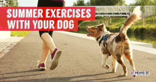 Summer exercises with your dog.
