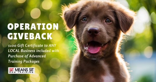 Operation Giveback - Dog Training