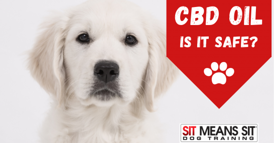 Is CBD oil for your dog safe?
