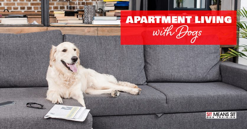 Apartment Living Tips with Dogs
