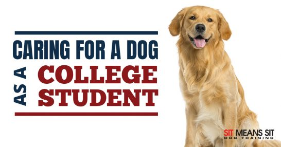 Tips for Caring for a Dog as a College Student