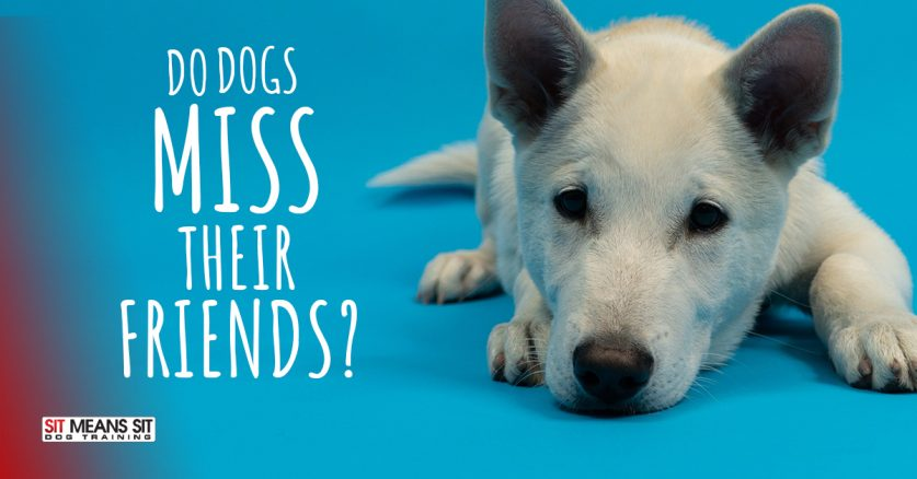 Do Dogs Miss Their Friends?
