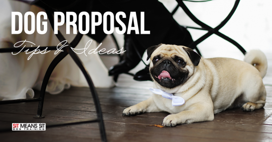 Including your dog in a marriage proposal.
