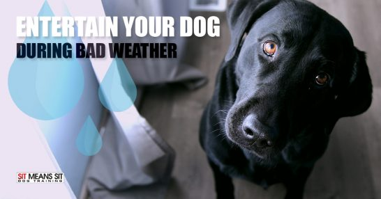 How to Keep Your Dog Entertained When the Weather is Bad