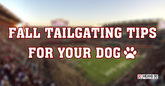 Fall tailgating tips for your dogs!