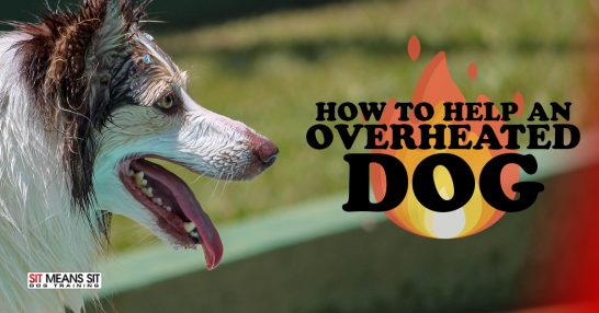 How to Help an Overheated Dog