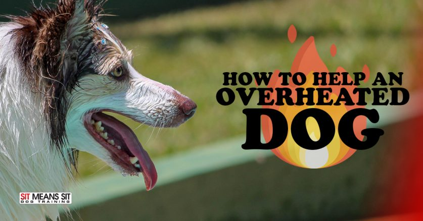 How to Help an Overheated Dog