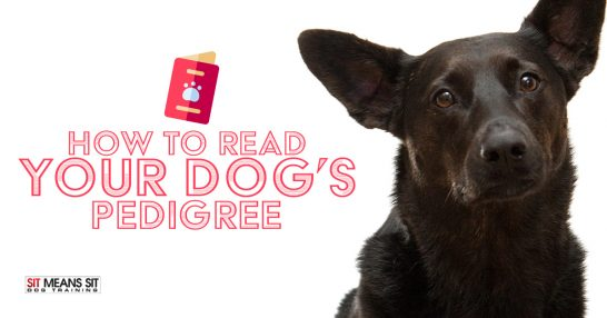 How To Read Your Dog's Pedigree