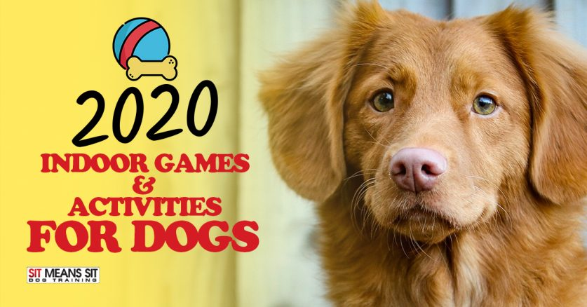 Indoor Games & Activites for Dogs in 2020