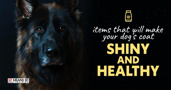 Items That Will Help Make Your Dog's Coat Shiny And Healthy