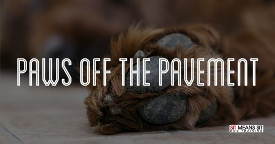 Keeping your dogs paws off hot pavement.