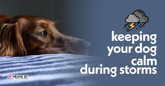 Keeping Your Dog Calm During Storms
