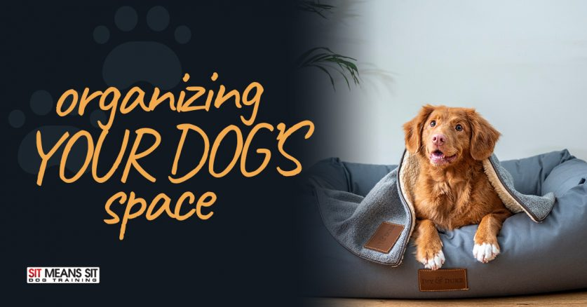 Organizing Your Dogs Space