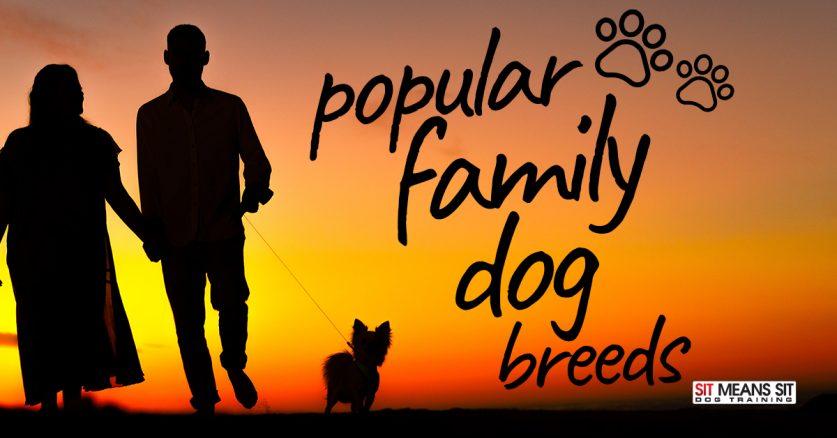Popular Family Dog Breeds