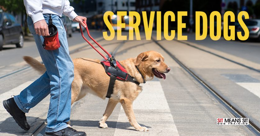 How to act around service dogs.