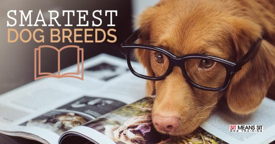 What are the Smartest Dog Breeds?