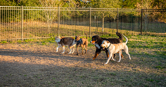 College Station Doggie Day Care