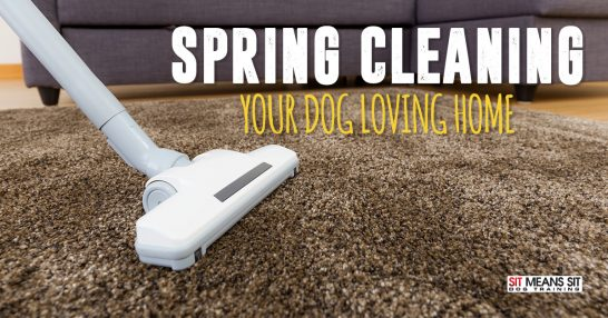 Spring cleaning your dog loving home.