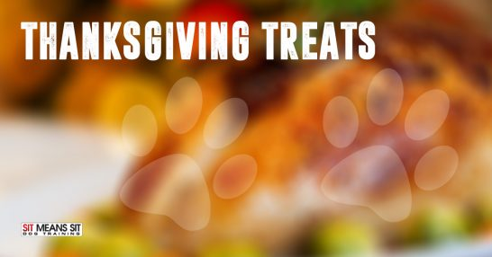 Thanksgiving treats to share with your Dog.
