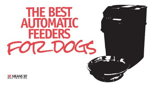 The Best Automatic Feeders for Dogs