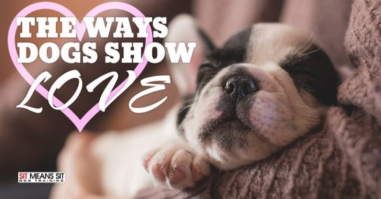 The Ways Dogs Show You Love