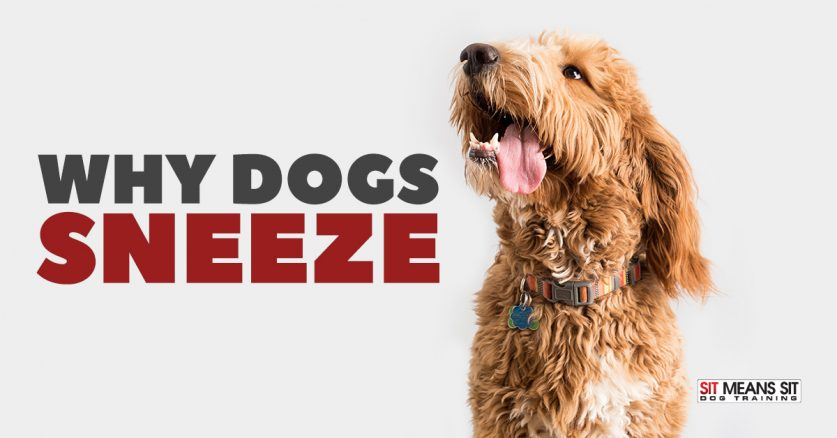 Why Dogs Sneeze